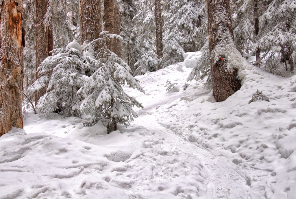 BC Coastal rainforest in snow